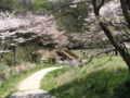[春][新緑][桜][長沼公園]