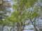 [春][新緑][長沼公園]