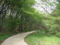 [新緑][春][長池公園]