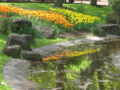 [春][昭和記念公園][水辺]
