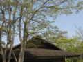 [春][昭和記念公園][新緑]日本庭園