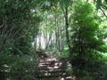 [蓮生寺公園]たんぽぽの道