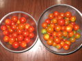 [☆][トマト]プチトマト