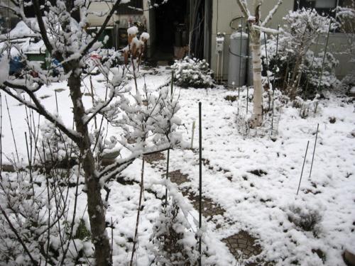 [雪][冬]