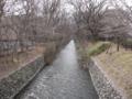 [冬]冬の玉川上水