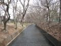 [玉川上水緑道]昭島から玉川上水緑道ウォーキング