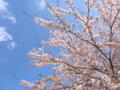 [桜][春]八王子市南大沢辺り