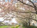 [桜][春]大栗川沿いの桜