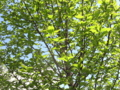 [春][新緑]目に眩しい緑