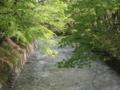 [玉川上水緑道][春][新緑]