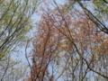 [かたらいの道][春]春の紅葉
