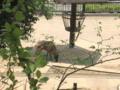 [かたらいの道][春][新緑]多摩動物公園