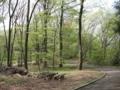 [かたらいの道][春][新緑]七生丘陵公園