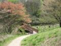 [長沼公園][春][新緑]殿ヶ谷の道を下る