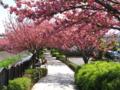 [春]春の遊歩道
