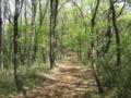 [春][新緑]新緑の中を歩く