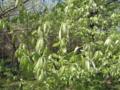 [春][新緑]新緑そのもの