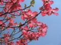 [春]真っ赤な花