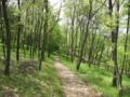 [昭和記念公園][春][新緑]木漏れ日の丘
