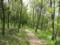 木漏れ日の丘