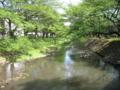 [春][新緑][水辺]根川