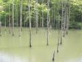 [小山内裏公園][水辺]太田切り池