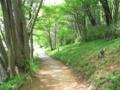 [新緑]里山への路