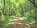 [新緑]木漏れ日の中