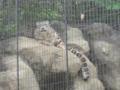 [多摩動物公園]ヒョウ柄の猫