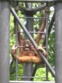 [多摩動物公園]小さい方はひょうきんだね
