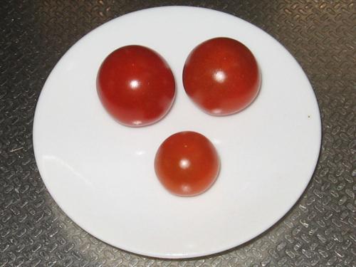トマトの初物