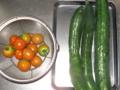 [胡瓜][トマト]またまたまた採れました