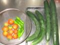 [胡瓜][トマト]胡瓜4本トマトしし唐