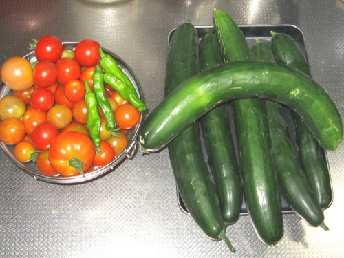 胡瓜6本トマトしし唐
