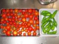[トマト]トマトとしし唐