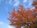 [秋][紅葉]秋の空と紅葉