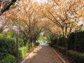 [秋][黄葉]黄色いトンネル