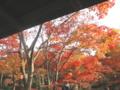 [秋][昭和記念公園]