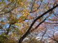 [秋][紅葉][根川緑道]