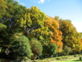 [秋]色付く雑木林