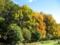 色付く雑木林