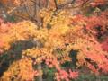 [桜ヶ丘公園][秋][紅葉]