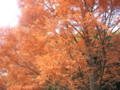 [桜ヶ丘公園][秋]