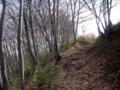 [冬]雑木林の道