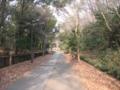 松が谷あたりの遊歩道