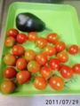 [茄子][トマト]今日の収穫(トマトがとれだした