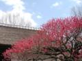 [府中市郷土の森公園][春]梅