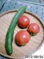[トマト][胡瓜]今日の収穫