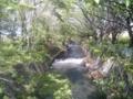 [新緑]根川