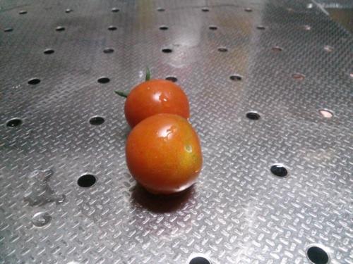 7月4日の収穫